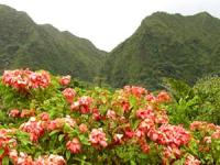 Oahu Nature Tours - Valley of the Rainbows Adventure - Hawaii Discount