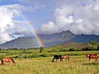 Princeville Ranch Adventures - Ride N' Glide - Hawaii Discount