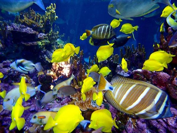Maui ocean center hawaiian aquarium hawaii discount for Discount aquarium fish and reef