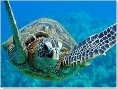 Hawaii Vacation Deals
