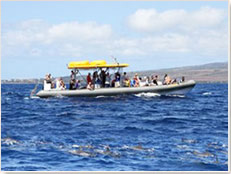Quicksilver Charters - Lanai Snorkel & Dolphin Excursion