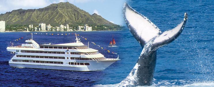 Star Of Honolulu Premier Whale Watch Cruise Hawaii Discount - Cruise ship whale
