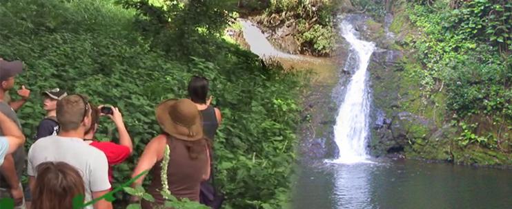 Base Of Manoa Falls