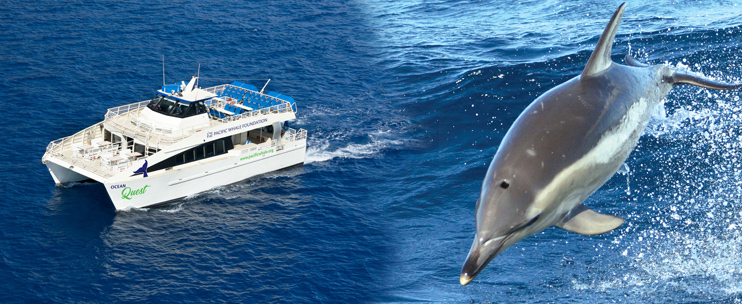 Pacific whale foundation snorkel coupon code