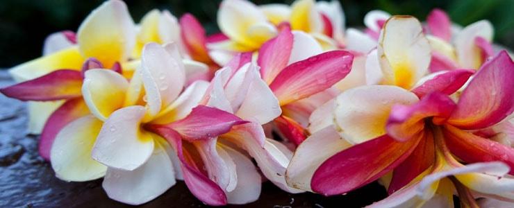Oahu lei greetings at honolulu international airport hawaii discount m4hsunfo