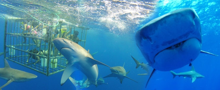 Hawaii shark encounters on oahu hawaii discount for Plenty of fish oahu