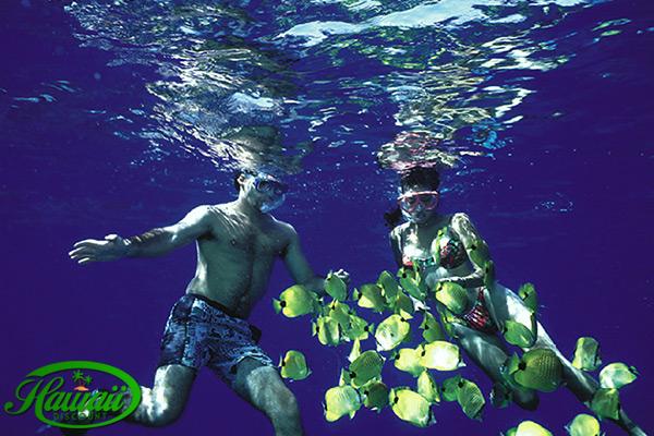 Kauai Cheap Snorkeling Tours