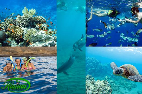 maui's-best-snorkeling